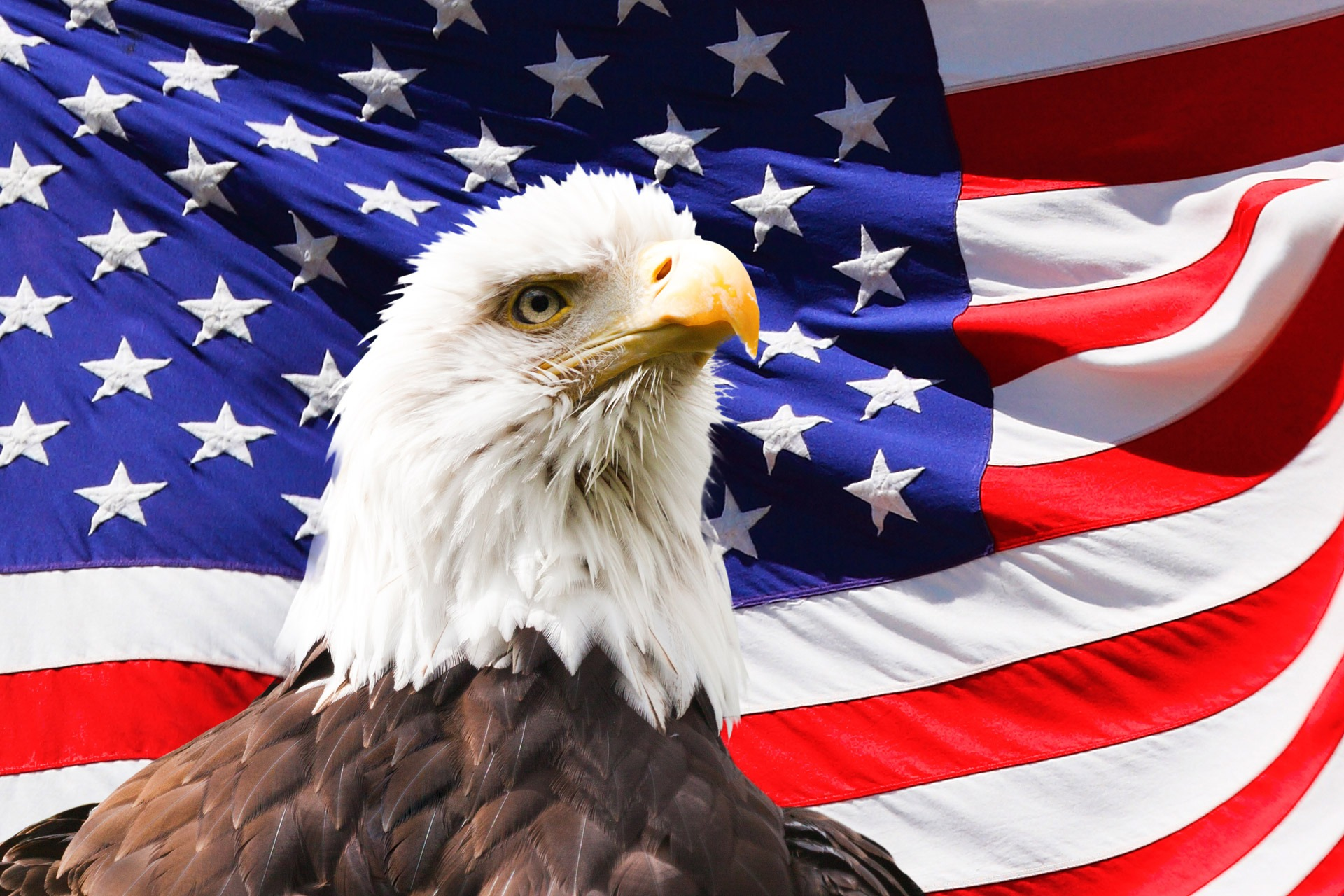 eagle-219679